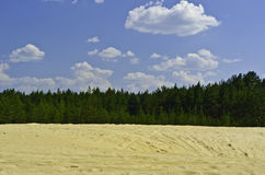 Sand-dyner är i en pine-wood. Arkivbilder
