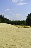 Sand-dyner är i en pine-wood. Royaltyfria Foton