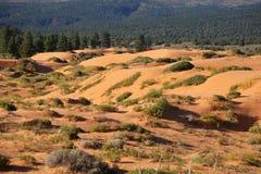 sand för reserv för koralldyner rosa Fotografering för Bildbyråer