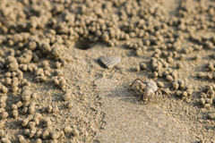 Sand för spökekrabbadanande klumpa ihop sig på stranden Liten krabba som gräver ho arkivfoto