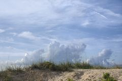 sand för stranddyngräs Arkivfoton