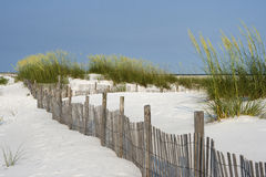 Sand Fence at Pensacola Beach. Sand fence among ripe sea oaats helps prevent erosion in dunes on Santa Rosa Island in Pensacola, Florida Royalty Free Stock Images
