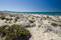 Sand and flowers in a Sardinian beach Royalty Free Stock Photography