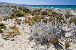 Sand and flowers in a Sardinian beach Stock Images