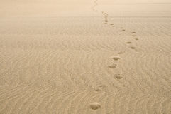 Sand footprints Stock Images