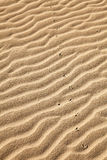 Sand footprints Stock Image