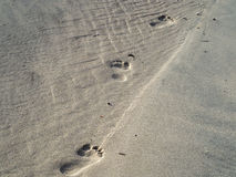 Sand footprints Royalty Free Stock Photography