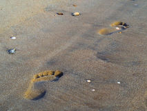 Sand footprints. Detailed human footprints on the beach - Morro Branco Beach - Ceara - Brazil Stock Photos