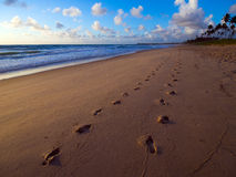 Sand footprints Royalty Free Stock Image