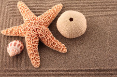 Sand Garden with Starfish and Sea Urchin Stock Image