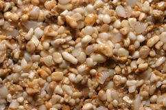 Sand Grains Background Texture Royalty Free Stock Images