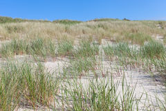 Sand and grass. Stock Images