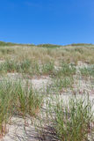 Sand and grass. Royalty Free Stock Photography