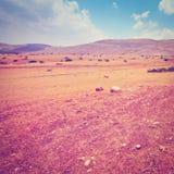 Sand-Hügel Lizenzfreie Stockfotos