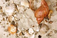 sand havsskal arkivbilder