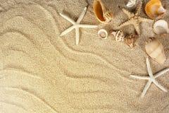 sand havsskal Arkivfoton