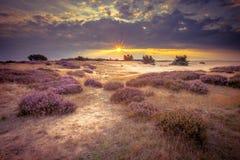 Sand-Heide Hoge Veluwe in den Retro- Farben stockfoto