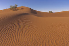 Sand hill in the Sahara desert Royalty Free Stock Photos