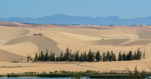 Sand hills with green trees in Phan Thiet, Vietnam Stock Photography