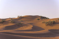 Sand hills in the Sahara desert Stock Images