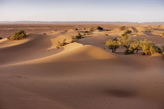 Sand hills in the Sahara desert Royalty Free Stock Photos