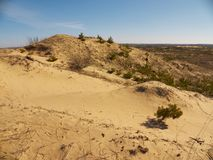 Sand hills wit remains of small spruces Royalty Free Stock Photo
