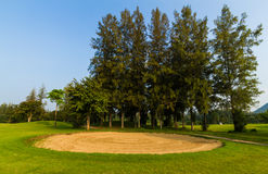 Sand hole in golf course. Sand hole and big tree in golf course Royalty Free Stock Image