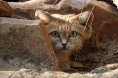 Sand-Katze Lizenzfreie Stockfotografie
