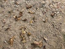Sand lämnar höst för bakgrund för strandbruntsikt royaltyfri bild