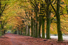 Sand lane with trees in autumn Stock Photo