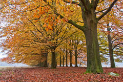 Sand lane with trees in autumn Stock Images