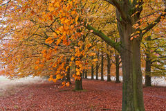 Sand lane with trees in autumn Royalty Free Stock Photo