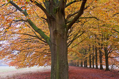 Sand lane with trees in autumn Royalty Free Stock Images
