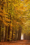 Sand lane with trees in autumn Stock Image