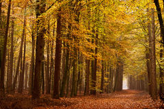 Sand lane with trees in autumn stock photography