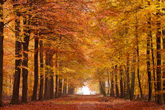 Sand lane with trees in autumn Stock Photos