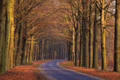 Sand lane with trees in autumn Royalty Free Stock Image