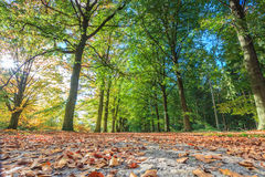 Sand lane with trees lit by sun in autumn Stock Photography