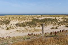 Sand and marram on the Dutch coast. Stock Images
