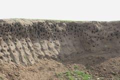 Sand martin's nesting hole Royalty Free Stock Image