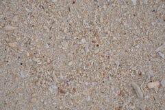 Sand med det lilla skalet Arkivfoto