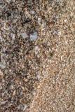 Sand mit Muschel am Strand Lizenzfreies Stockfoto