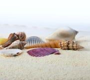 Sand mit Seeshell Lizenzfreies Stockfoto