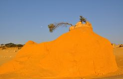 Sand Mound with Moon in the Pinnacle Desert: Western Australia royalty free stock photo