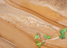 Sand. New life of plant on wet sand Royalty Free Stock Images