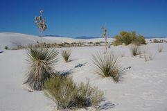 White sand National Park, New Mexico royalty free stock image