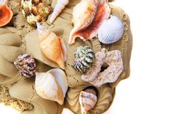 Sand objects with sea shells isolated. On the white background stock photography