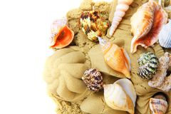 sand objects with sea shells isolated Royalty Free Stock Image