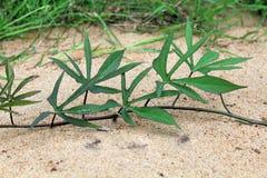 Sand och gräs på det arkivfoton