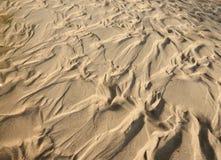 Sand- och gyttjamodell Arkivfoto